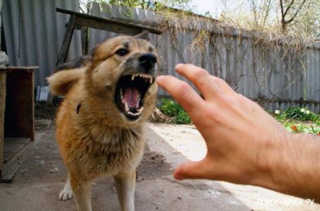 «Бешенство — смертельная угроза для животных и людей»